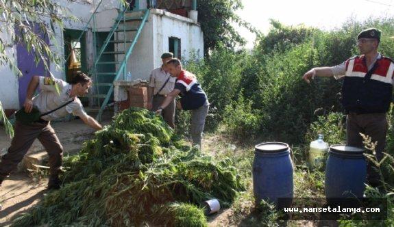 Alanya'nın O köyüne hint keneviri baskını yapıldı