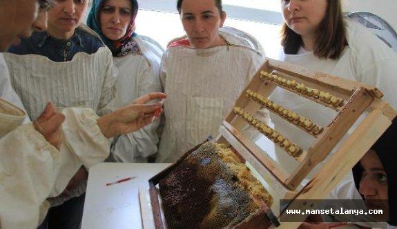 Bahar balının kilosu 50 lira