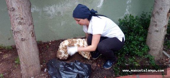 Alanya'da 6 kedi telef edilmiş halde bulundu
