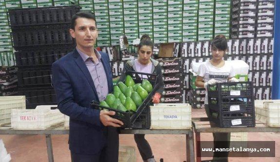 Alanya ve Gazipaşa'da günün en güzel haberi. Romanya'ya ihracaatı başladı