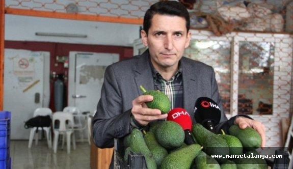 Alanya'da Bu Yıl Avokado Üretiminde Hedef 60 Milyon Adet