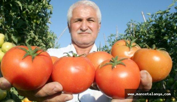 Antalya'dan 4 TL'ye yola çıkan domates, İstanbul'da mutfağa 14 TL'ye giriyor