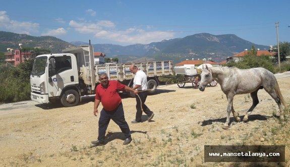 Böcek'in talimatıyla, Alanya da fayton ve atlar teslim alındı!