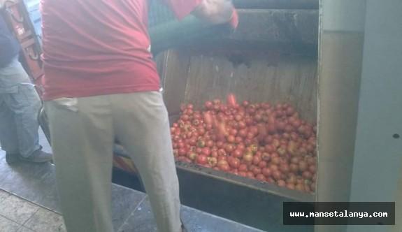 Gazipaşa da domatesler çöpe dökülmeye başlandı!