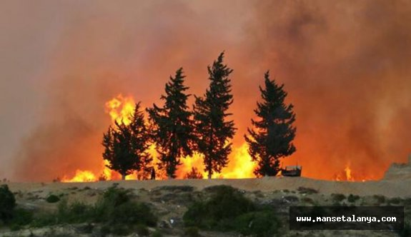 Dim Alacami bölgesinde yangın