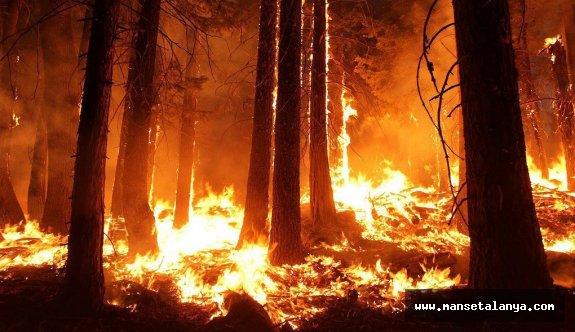 Alanya da 7 dönümlük ormanlık alan yandı!