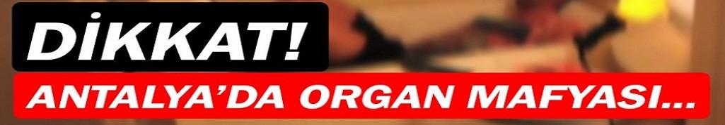 Antalya'da organ mafyası çökertildi!