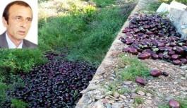 Alanyalı çiftçi sonunda pes dedi ve döktü, hal yasasını eleştirdi
