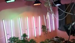 Alanya'da bir evde uyuşturucu bahçesi