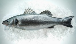 Dünyanın en kaliteli balığı Türkiye'den çıktı