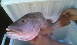 Alanyalı balıkçıların başı dertte. Tam 61 tür...!
