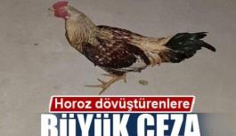 Alanya'da horoz dövüştürenlere ceza!