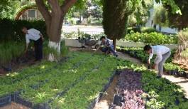 Büyükşehir, arife günü mezarlıklarda ücretsiz çiçek dağıtıldı
