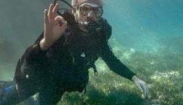 Vali balon balığı ile ilgili konuştu:Saçma sapan...!