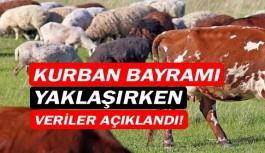 Türkiye, Kurban Bayramına hazır