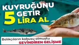 Alanya'da balık avcılarını sevindiren haber