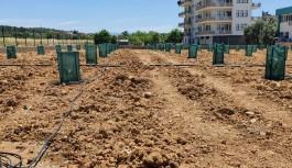 Alanya'da okul bahçesine avokado dikildi!