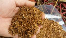 Alanya'da kaçak tütün operasyonu!