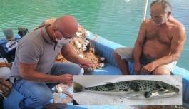 Alanya'da balon balığı avcılığına destek!