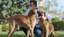Hayvan dostu Alanya belediyesi