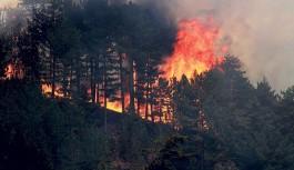 Alanya'da orman yangını kontrol altına alındı