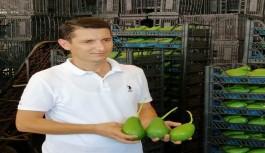 Alanya'da kuraklık üretimi düşürdü, fiyatı arttırdı!