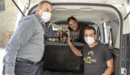 Alanya'da çoban köpeği sağlığına kavuştu