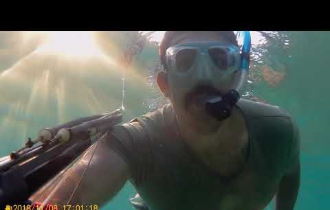 Alanya İncekum balon balığı operasyonu. Yakaladığını kesiyor...