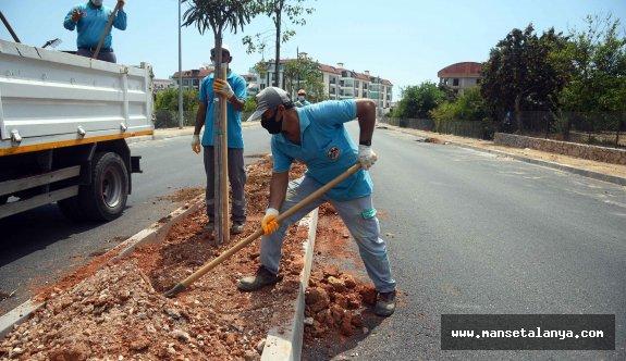 Hayri Doğan caddesi ağaçlandırılıyor